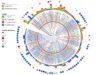 complexphylogeneticplots